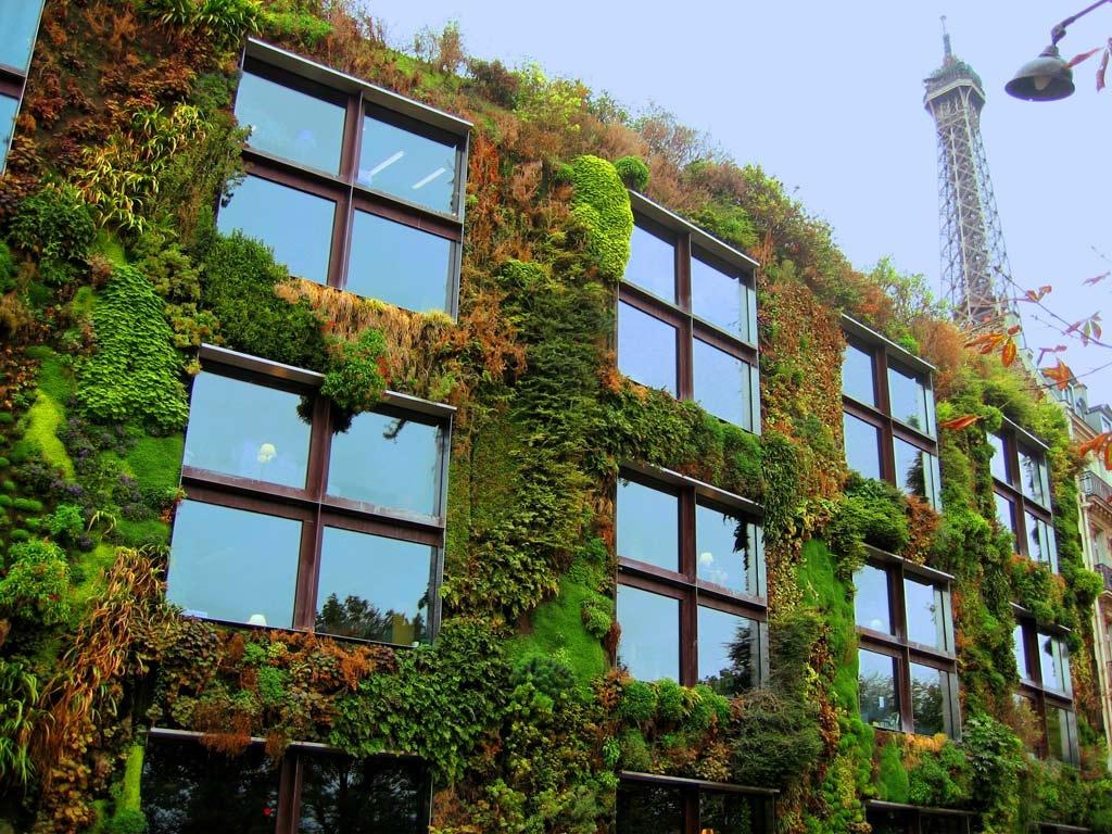 الجدران العشبية الخضراء